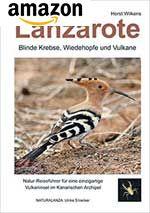 Lanzarote – Blinde Krebse, Wiedehopfe und Vulkane