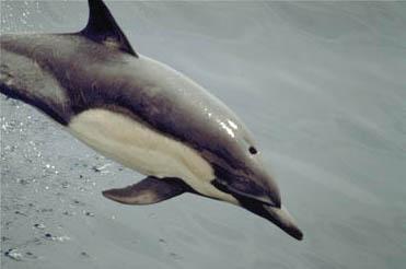 delfin-lanzarote